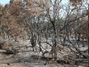Scorched Trees 2